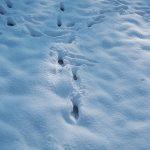voetsnappen in sneeuw